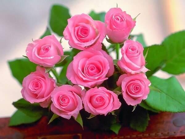 Mơ thấy hoa hồng có ý nghĩa gì, đánh số mấy?