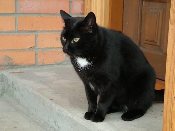 Mơ thấy mèo đen là điềm lành hay dữ?