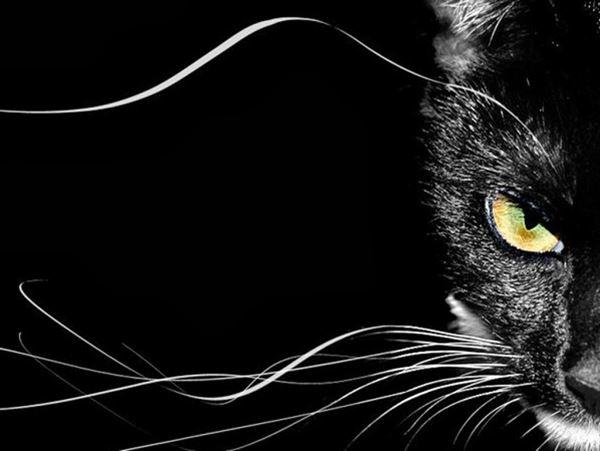 Mơ thấy mèo đen đánh con gì chuẩn xác, có phải điềm xui?