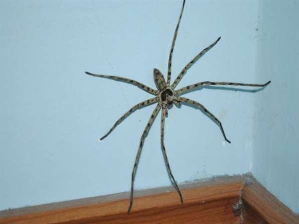 Gặp nhện điềm gì?