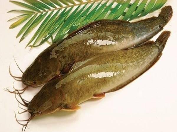 Mơ thấy cá trê đánh lô con gì? Chiêm bao thấy cá trên là điềm gì