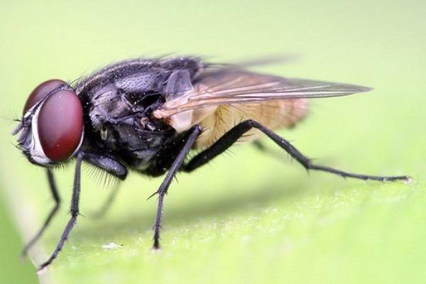 Nằm mơ thấy ruồi điềm báo gì? Đánh số mấy trúng?