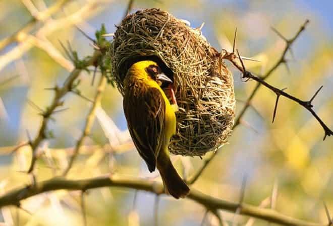 Mơ thấy tổ chim điềm báo gì đánh số gì